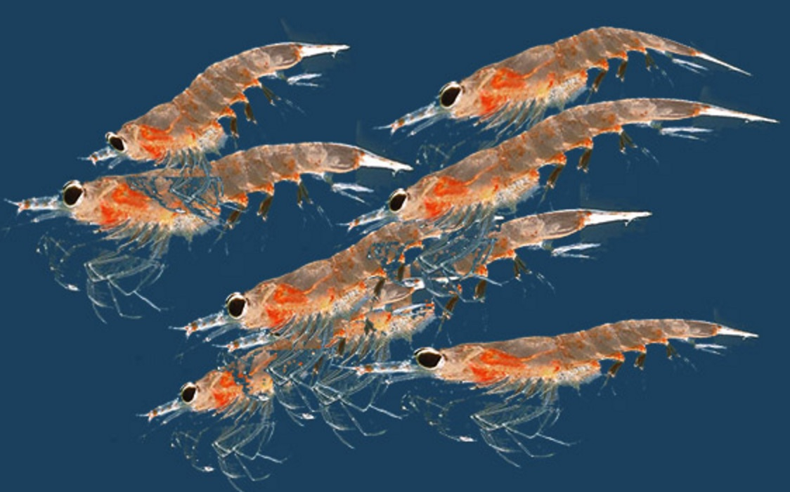 Best supplements for a great life boss life hacks for Krill or fish oil